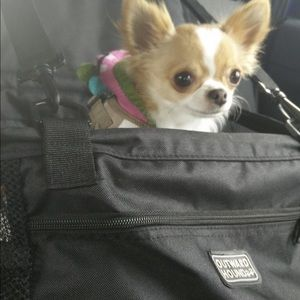 Dog Elevated Auto Booster Seat